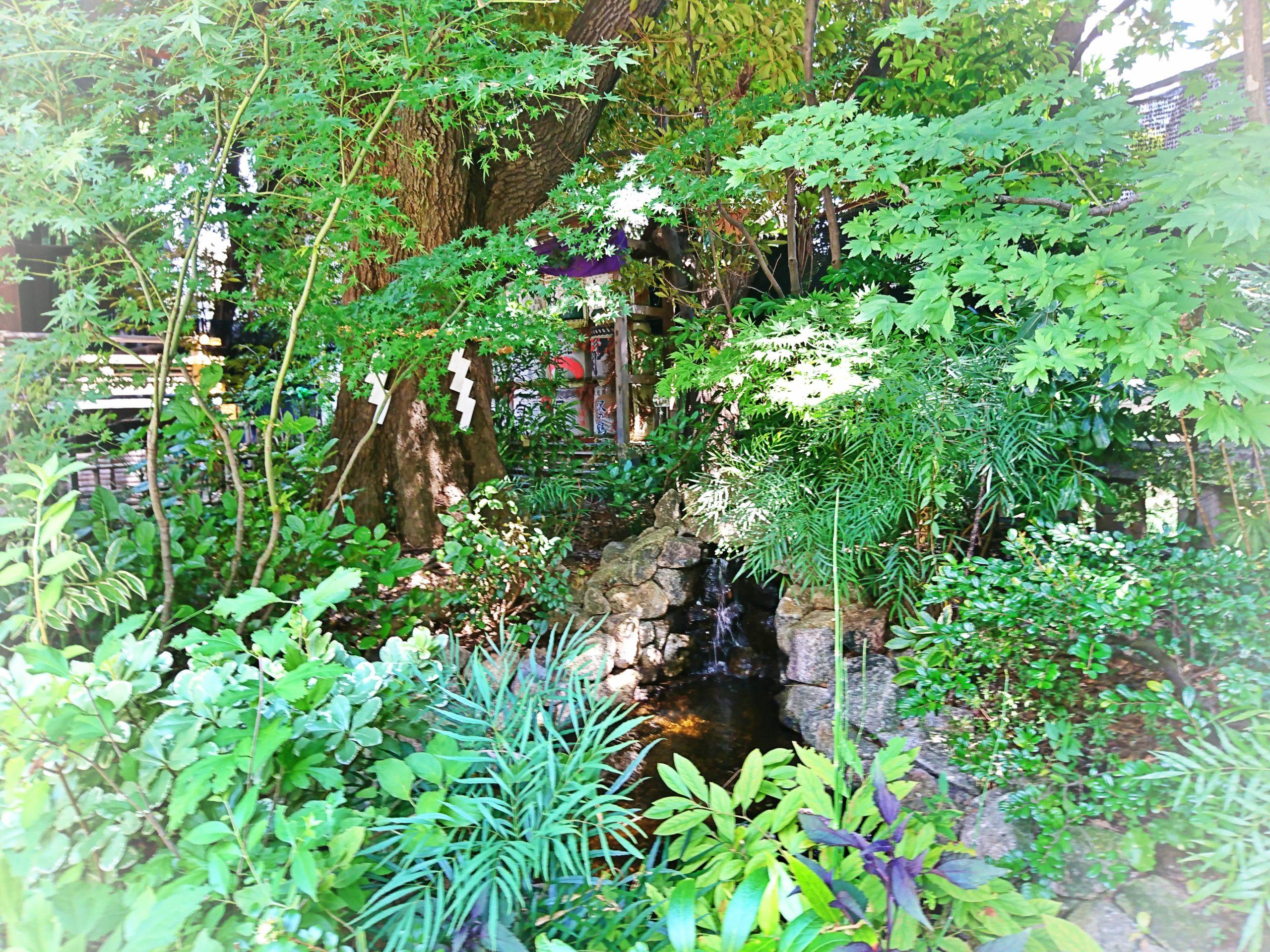 東京大神宮の境内にあるせせらぎと椎の木